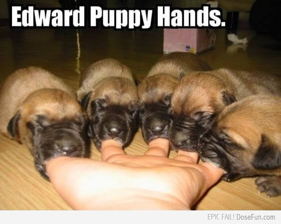 "When feeding puppies the most important thing you can do is feed them fresh food, the picture shows a human hand with 5 puppies sucking the fingers with the caption ""Edward Puppy Hands"""