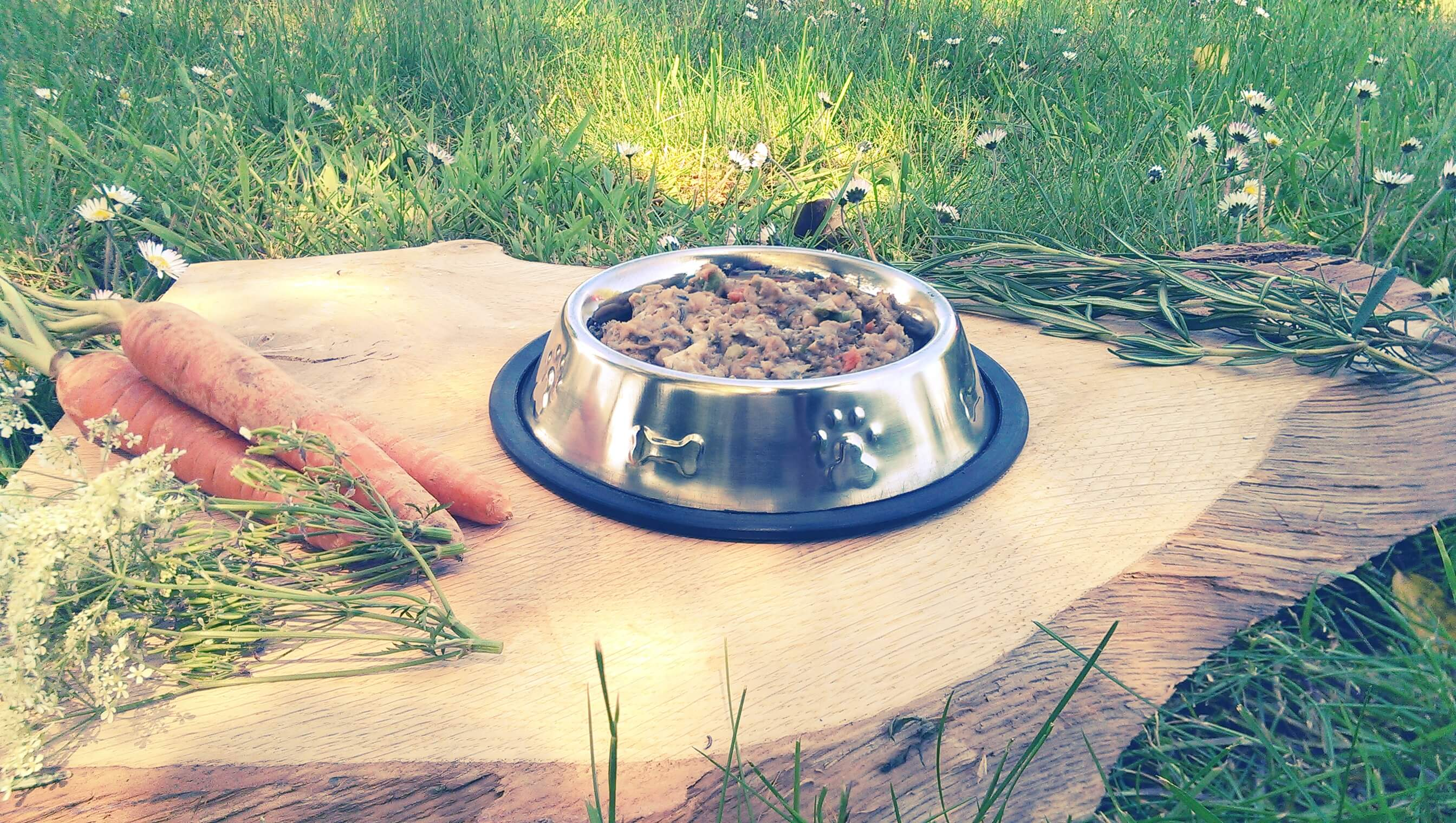 Allergies in Dogs - Part 4 What to do: Hypoallergenic Dog Food Dogs First