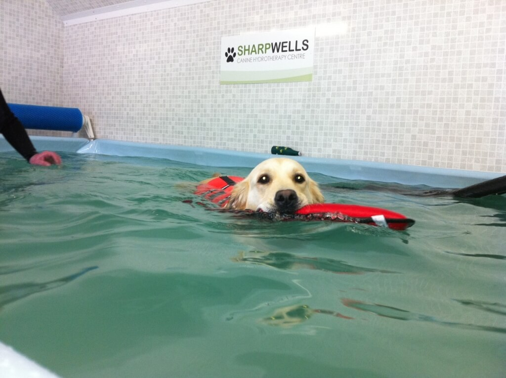 Hydrotherapy soothes arthritis in dogs
