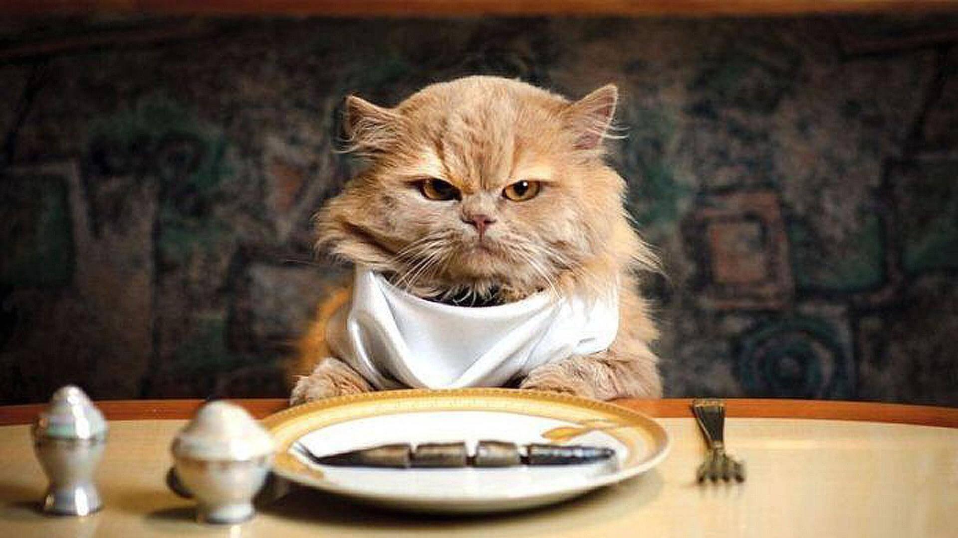 iams cat food recall 2017