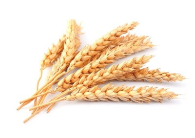 a picture of ears of wheat on a white background