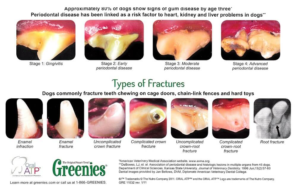 a chart showing the varying degree of gum disease in dogs