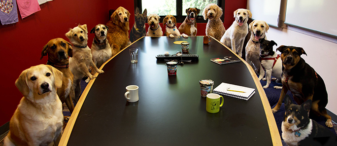 Tell Your Boss: Dogs Make Offices More Cohesive and Stress-Free, It's Official!
