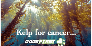 Kelp for Cancer…And Everything Else