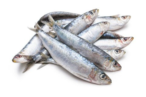oily fish for dogs