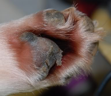 photo of a dry cracked dog paw