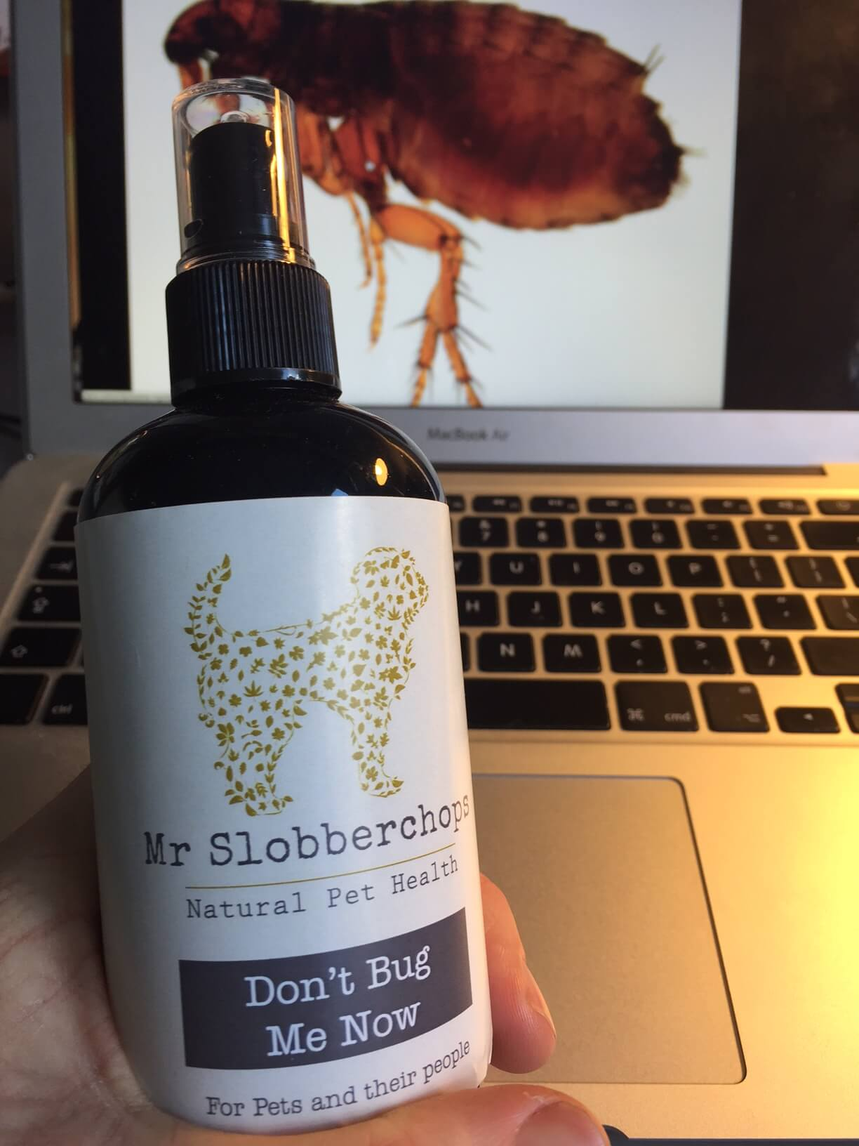 A bottle of Don't bug me now, flea and tick prevention in dogs