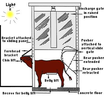 diagram of up right kosher killing