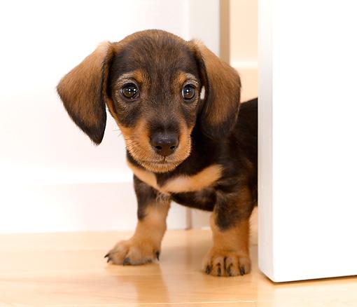 pup peeking around door