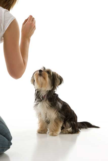 So You're Getting a Pup Part 4 – Basics of Dog Training