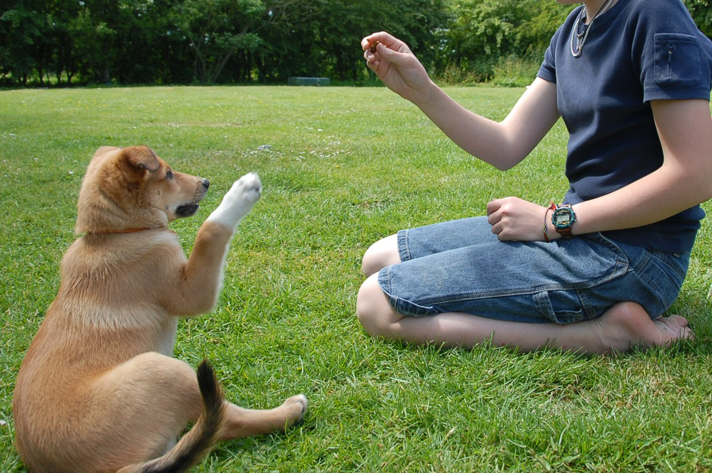 So You're Getting a Pup Part 4 - Basics of Dog Training Dogs First