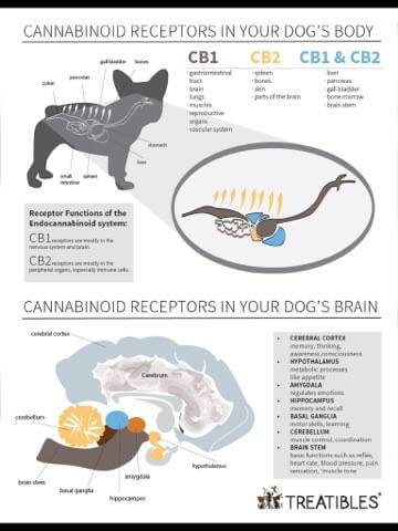 Look how many studies support the use of CBD oil... Dogs First