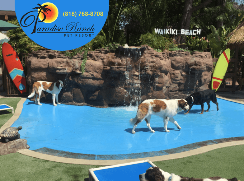 The Top 5 Kennels in the World - Dogs First Dogs First