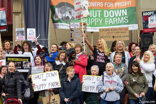 puppy farming protestors in Ireland