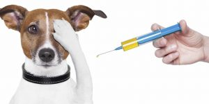 Giant Survey Reveals Shocking Amount of Illness in Dogs 3 Months Post-Vaccination…