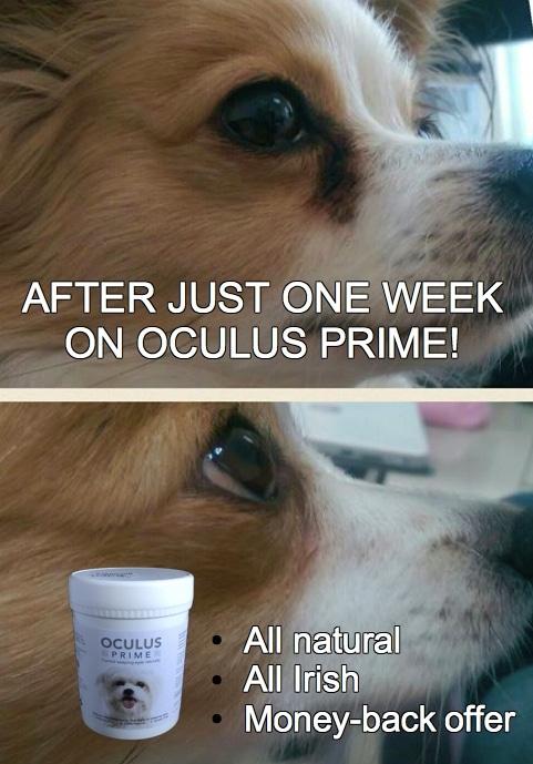 Oculus Prime Ad