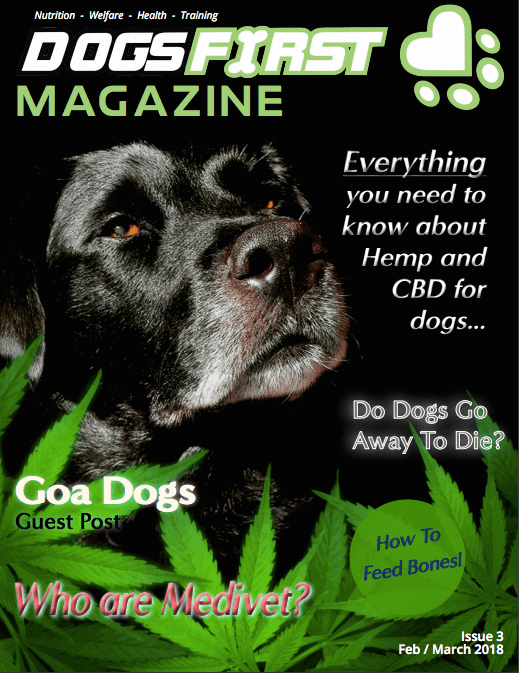 Dogs First Magazine February Issue cover