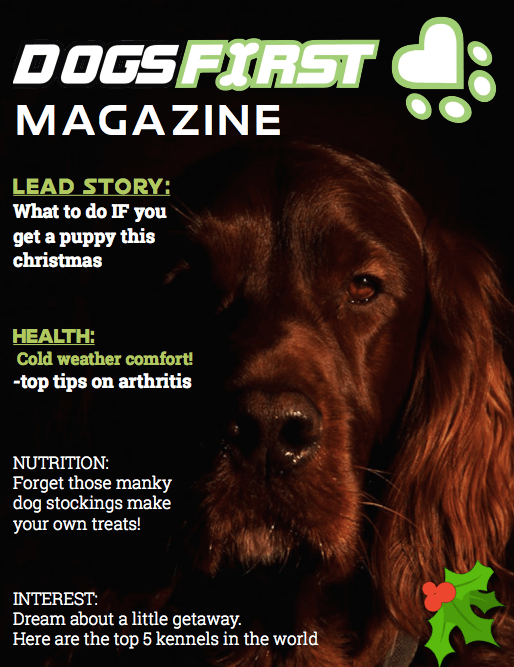 Dogs First Magazine Dec Issue cover