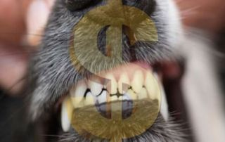 clean dog teeth with dollar sign