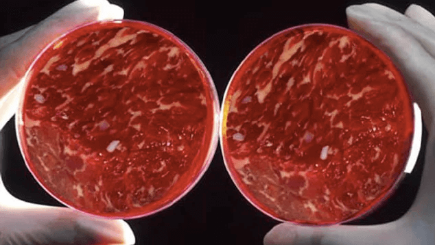 Lab-Grown meat hitting shelves by 2019!