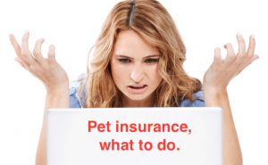 A Note on Pet Insurance in Ireland & UK Dogs First