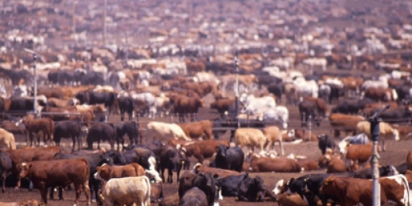 Where does the meat come from in your raw dog food?