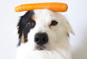 a dog with a carrot on his head