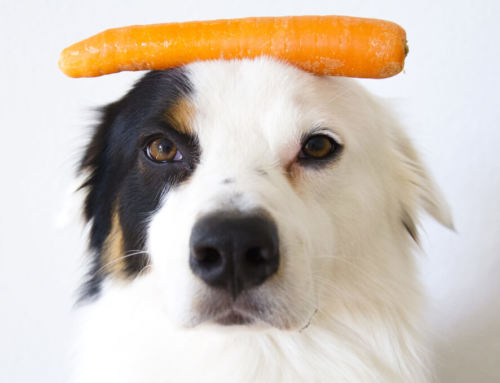 Feeding Vegetables to Dogs
