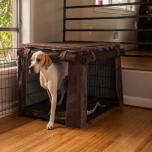 Should I Put Dog Bed In Crate