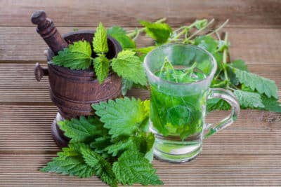 a small glass of nettle tea