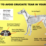 Cruciate Tear in a Dog: What to Do and How to Avoid