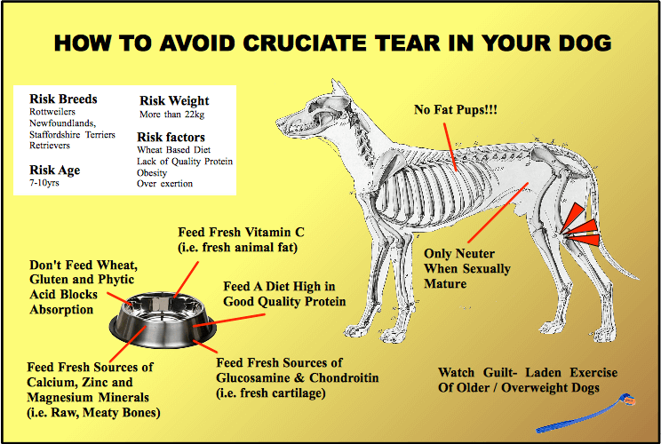 Diagram showing how to avoid a cruciate tear in dogs