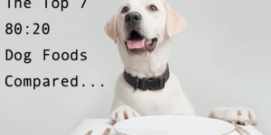 We Compare the Top 10 80:20 Dog Foods Available in UK…