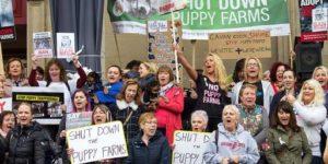 Puppy Farming in Ireland