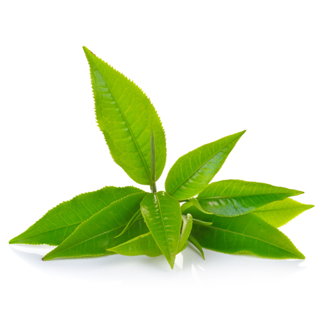 green tea for kidney disease in dogs