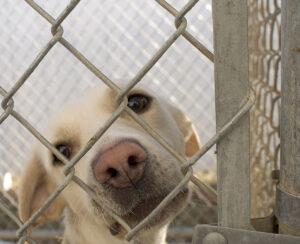 Irelands puppy farming shame