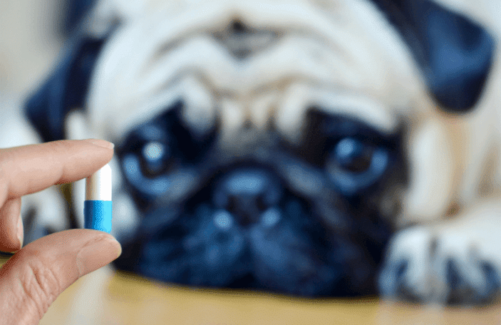 supplementing a dog with vitamins
