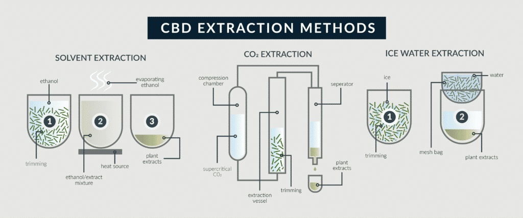 how CBD oil is extracted