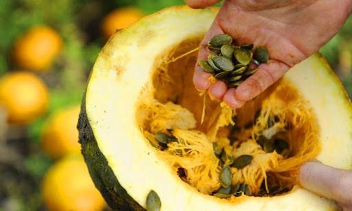 styrian pumpkin seeds in Kanex for cucurbitacin